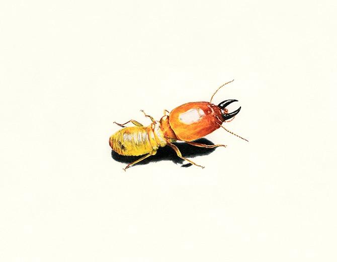 1804-8657780-AE-spot_illo-termite-w