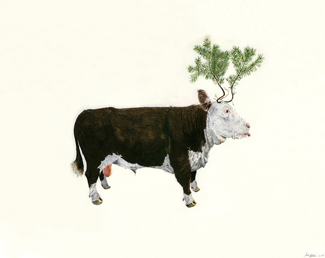 bull-and-spruce-w